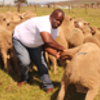 In the livestock development sector, government interventions should be aimed at encouraging the commercialisation of this sector through value addition activities.